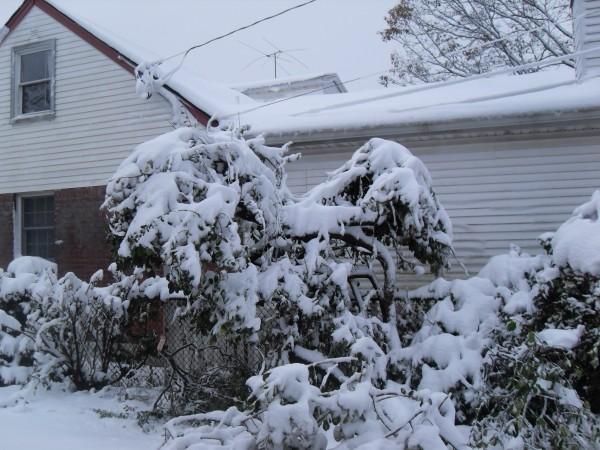 снежное утро 020