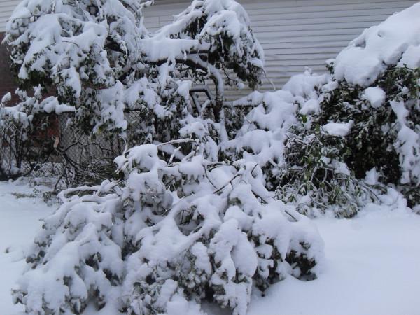 снежное утро 019
