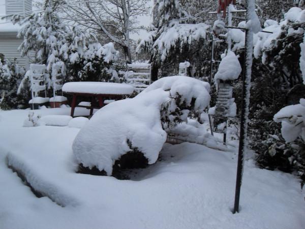 снежное утро 014