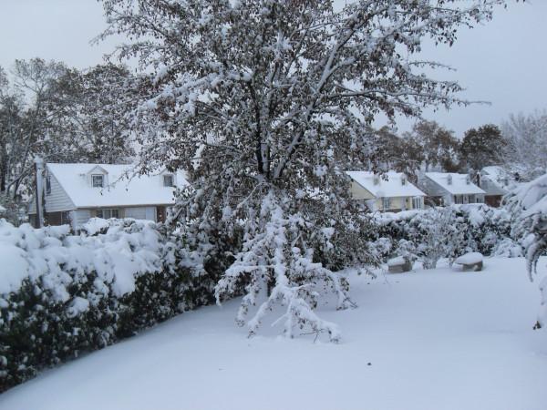 снежное утро 017