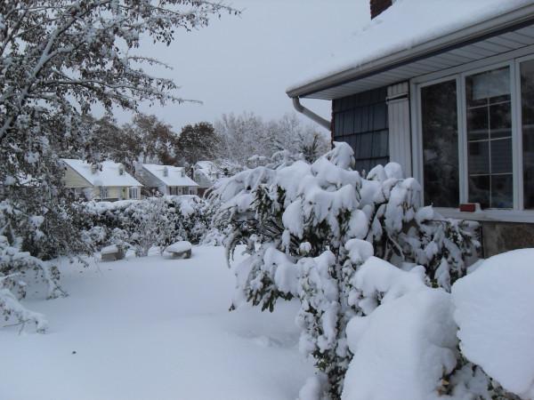 снежное утро 016