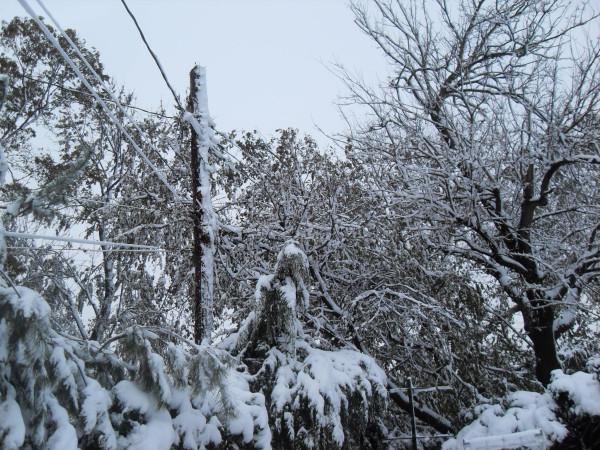 снежное утро 023