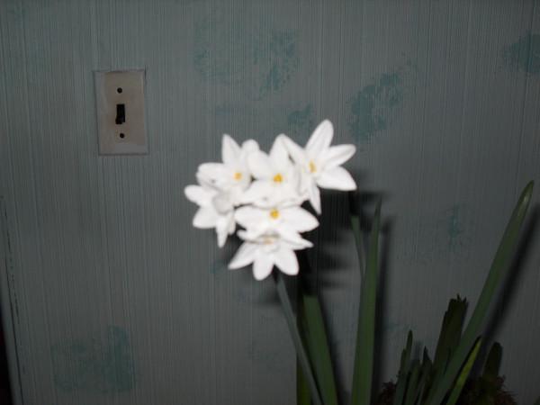 цветы 001