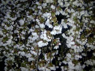 Hempstead-20110413-00114.jpg