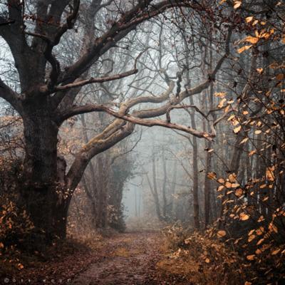 autumn-fog-forest-path-photography-Favim.com-268471