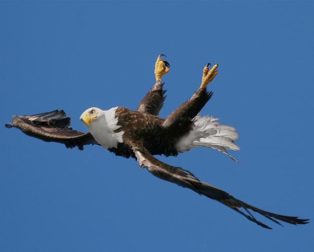 upside-down-eagle_1842013i