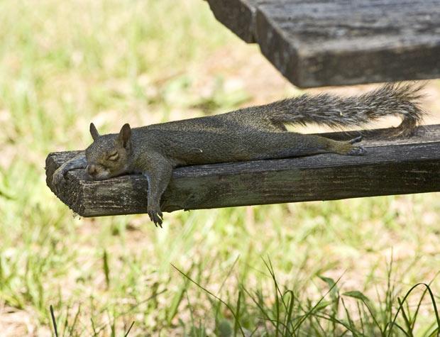 squirrel_1938303i