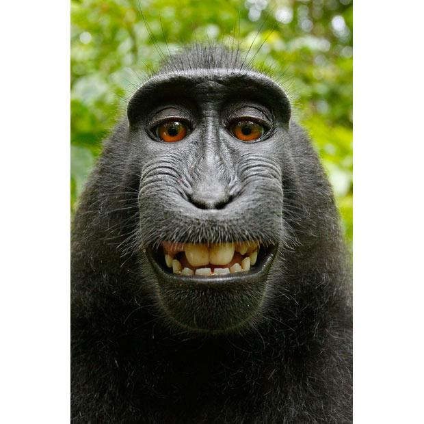 monkey-pose_1938071i