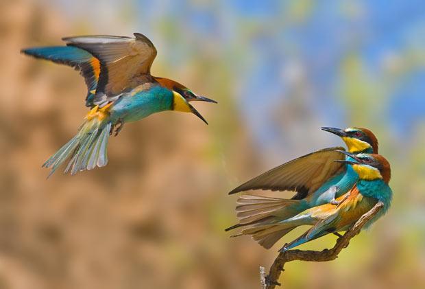 birds-caught_1915593i