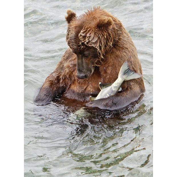 bear-fish_1944979i