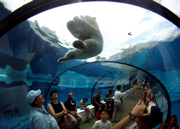 polar-bear-tunnel_1952907i