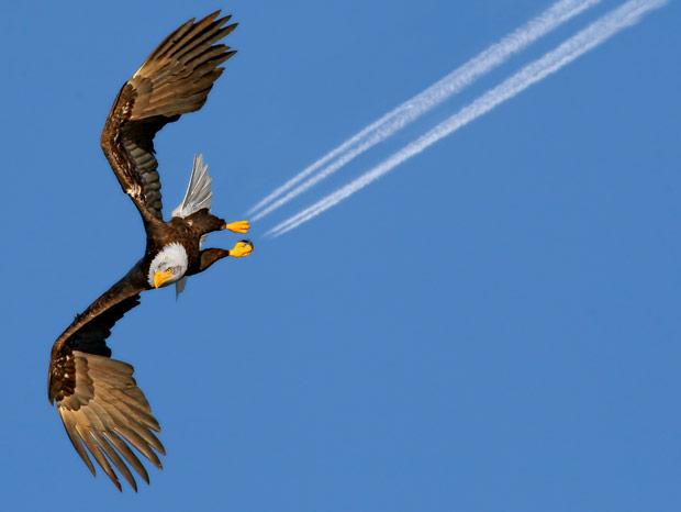 eagle-amaze_1906571i