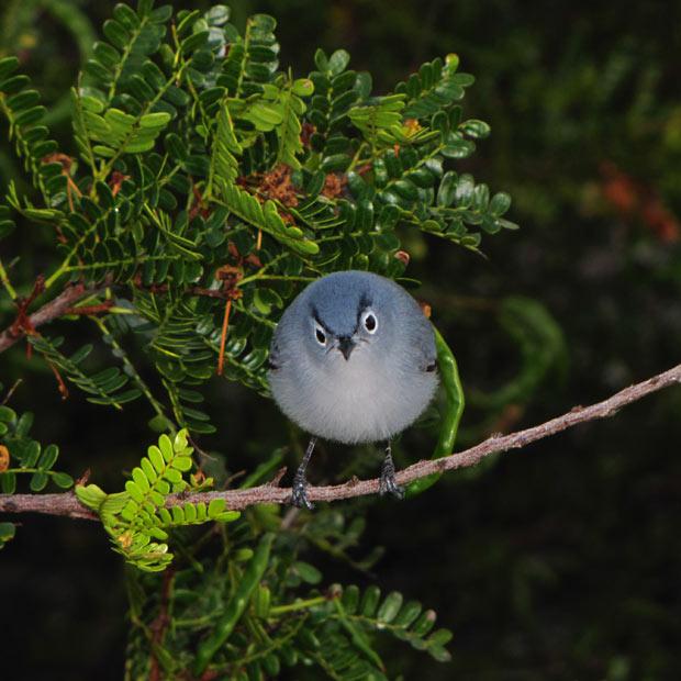 angry-bird_1861138i