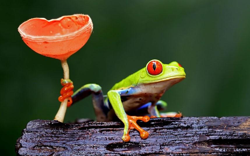 tree-frog_2236395k