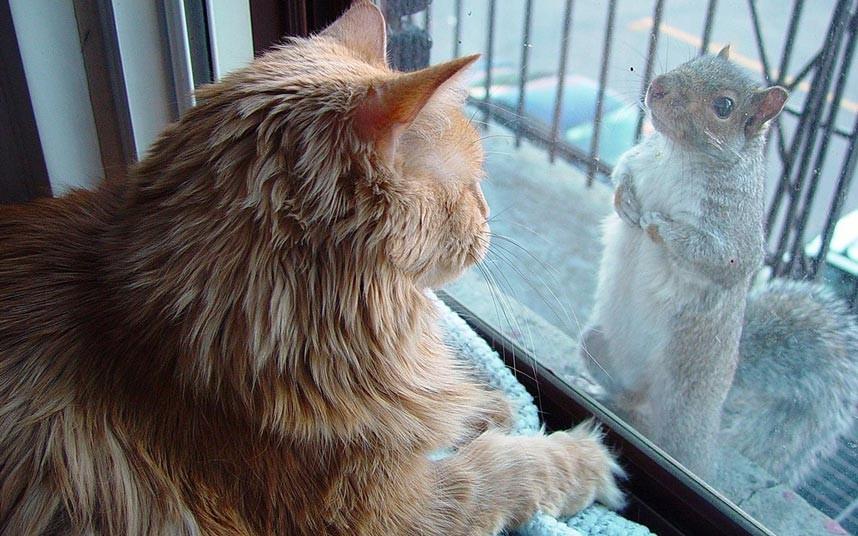 aotw-cat-squirrel_2205216k
