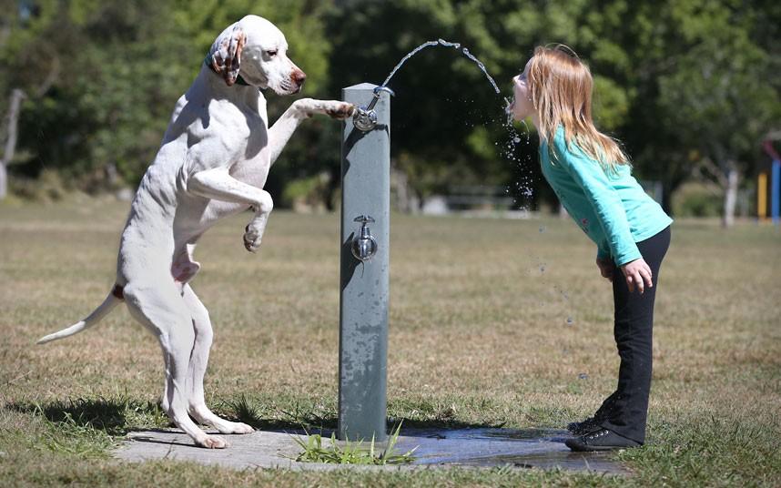 dog-water-fountain_2345280k