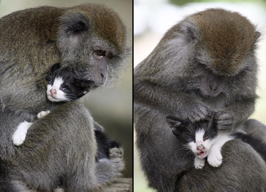 monkey-cat_2426527k