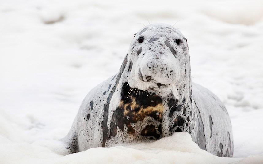 seal-foam_2414532k