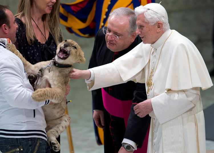pope-lion-cub_dec__2416381k