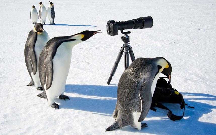 penguins-camera_2192314k