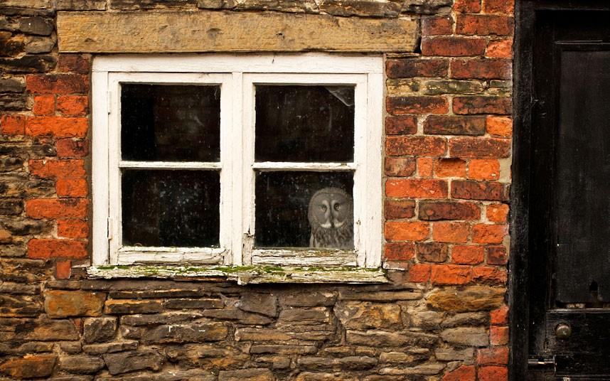 owl-window_2385438k