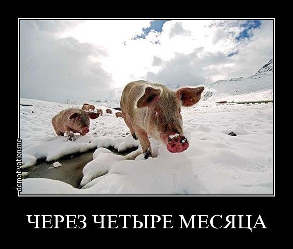 без свин