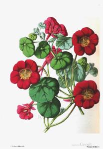 Страницы из The_Floral_magazine