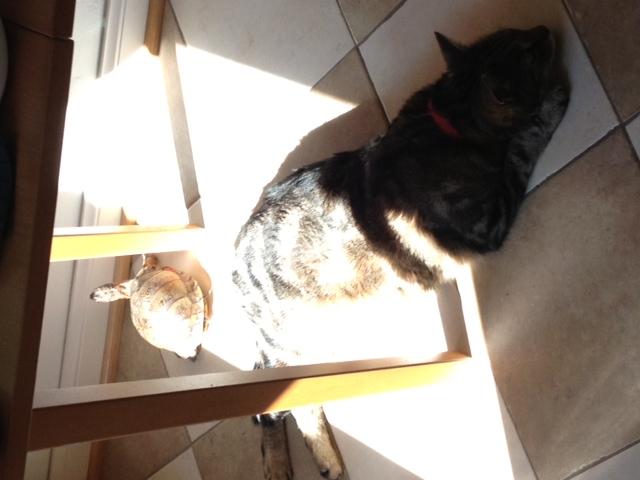 Mac and Dymphna in the sun