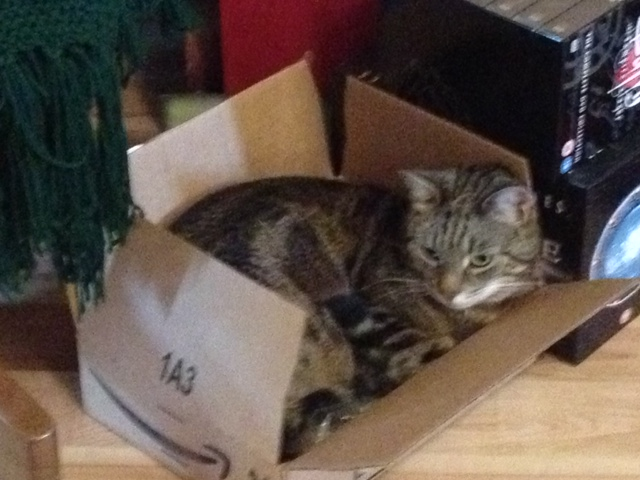 Mac hiding from Dymphna in a box