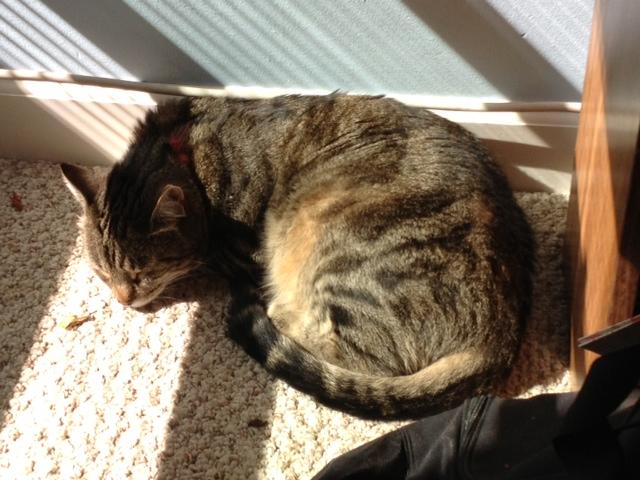 Mac in sun with AC