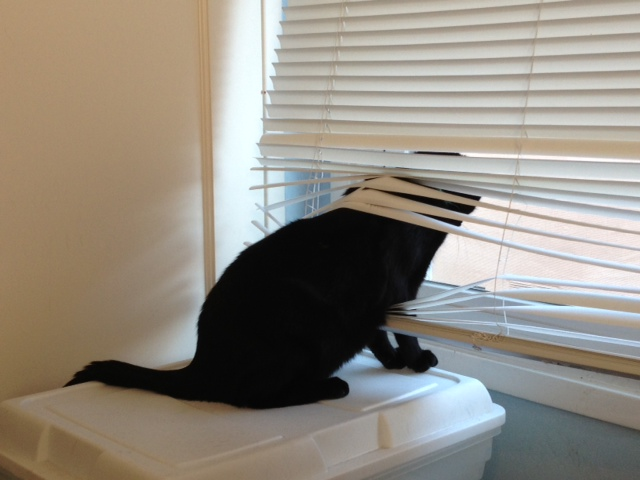 Barry in the blinds