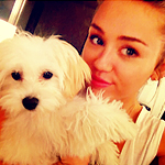 miley (15)