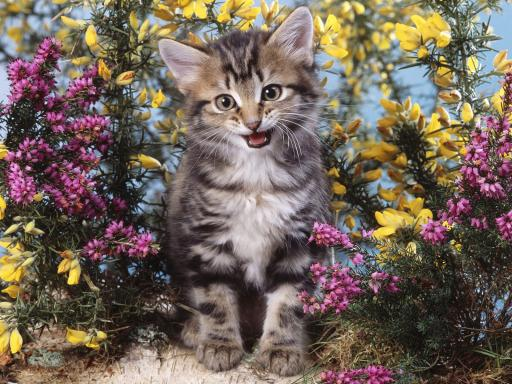 Smiling-Cat-With-Flowers-512X384-68