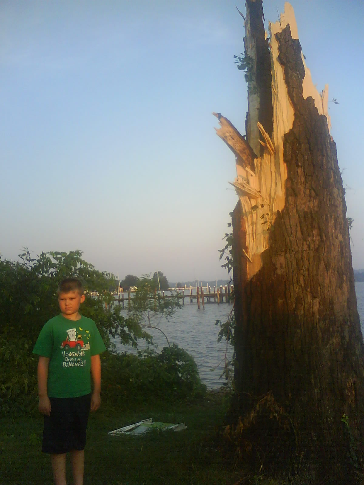 Logan and lost tree