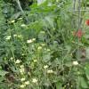 garden plants and weeds