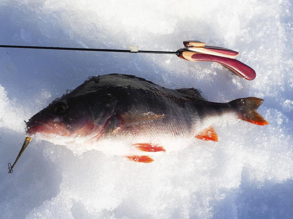 Рыбалка в Вологодской области в 2018 году