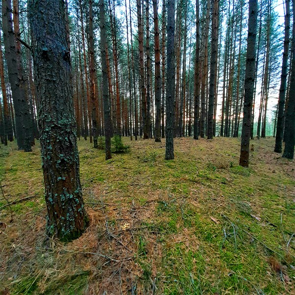 леса_04