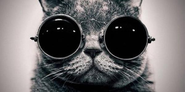 коты-2