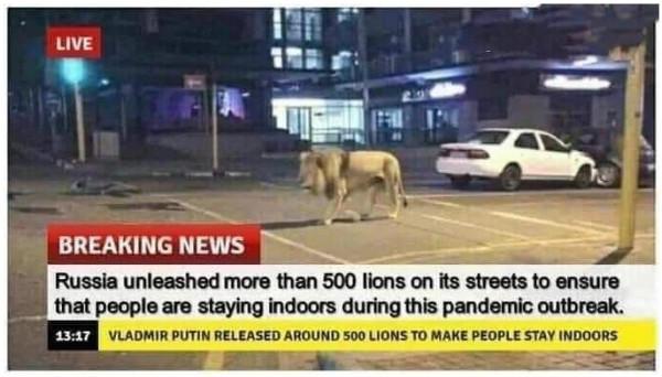 львы в россии
