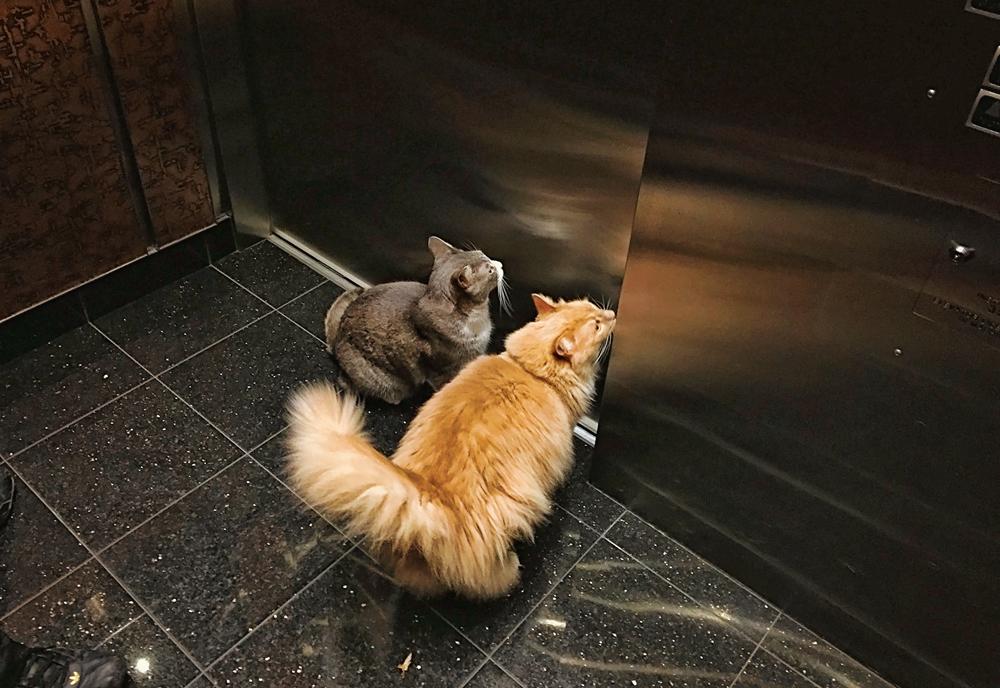 IMG_elevatorweb.jpg