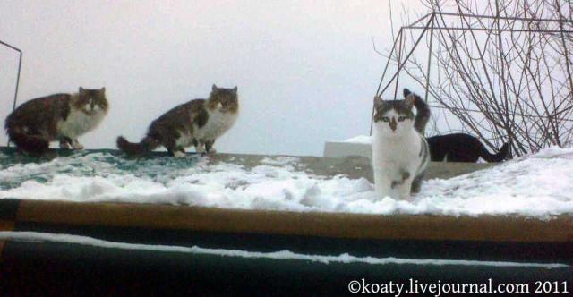 Крышные кошки