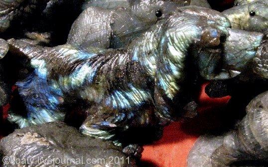 Собака из лабрадора