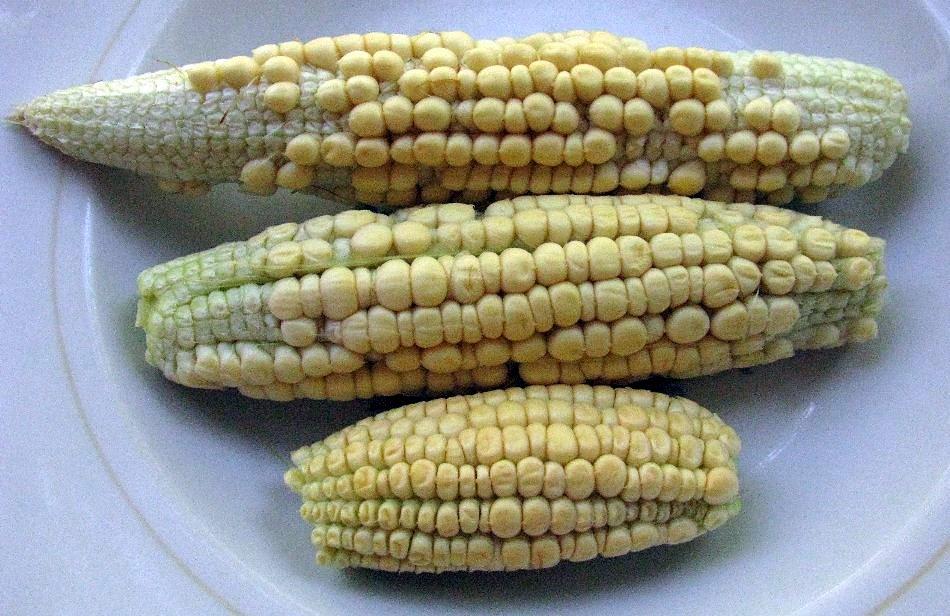 Кукуруза урожай