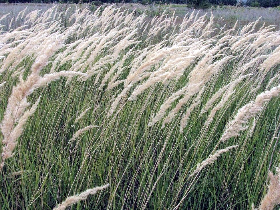 Трава по пояс