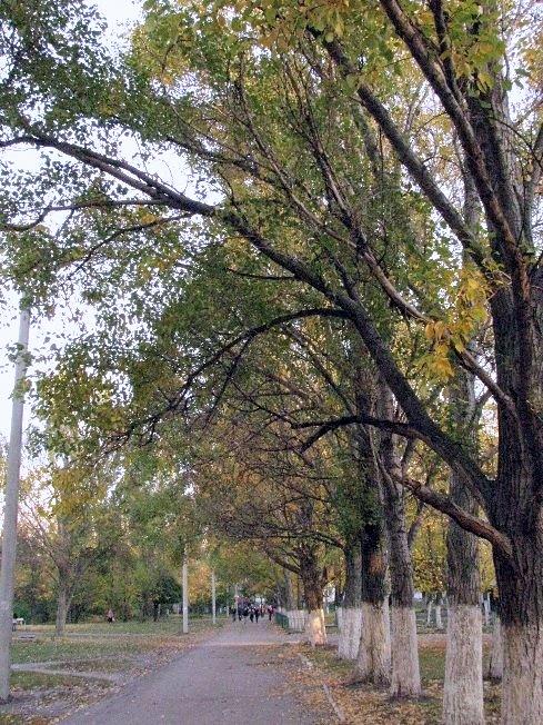 Осенняя аллейка