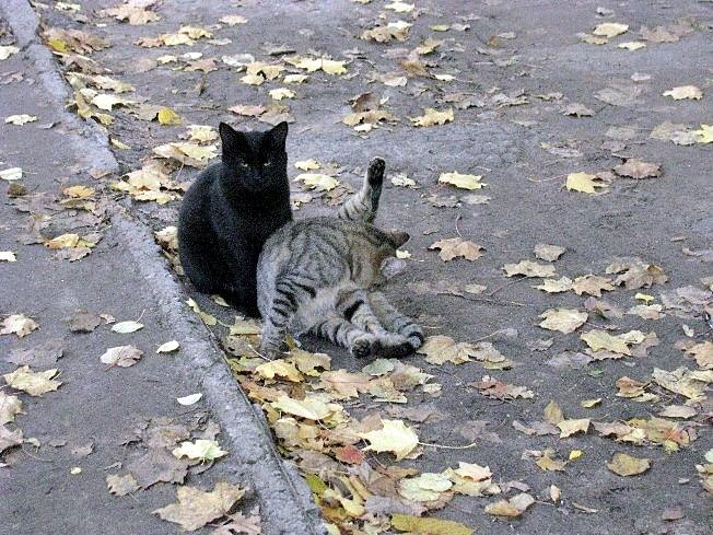 Должны быть у кошки чистые ножки