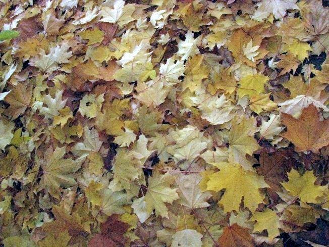 Листья для шуршания )