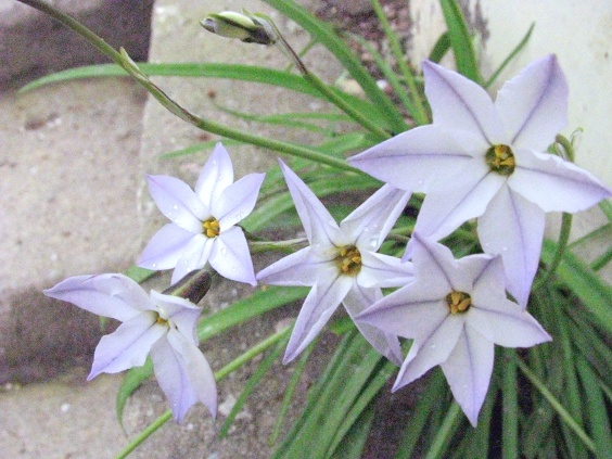 Неизвестные цветы Ялты