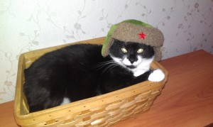 в России зимы настолько суровы, что ушанки носят даже котики IMAG0986