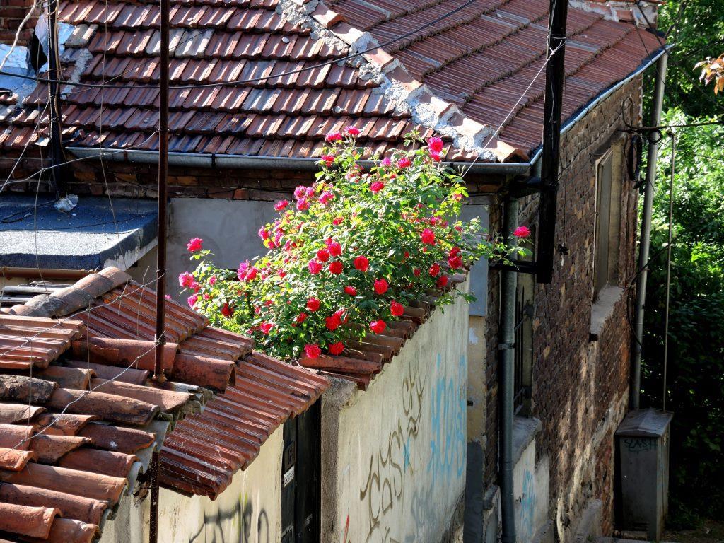 Болгария-2013 464